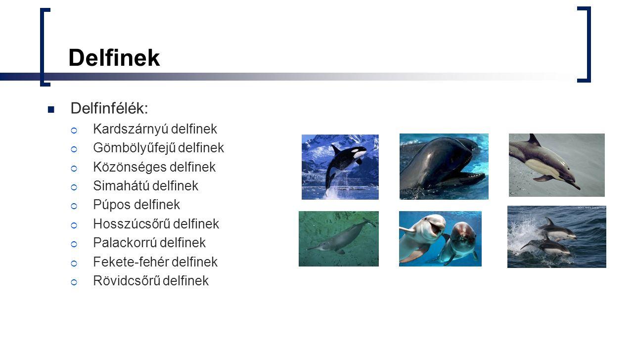 Delfinek Delfinfélék: Kardszárnyú delfinek Gömbölyűfejű delfinek