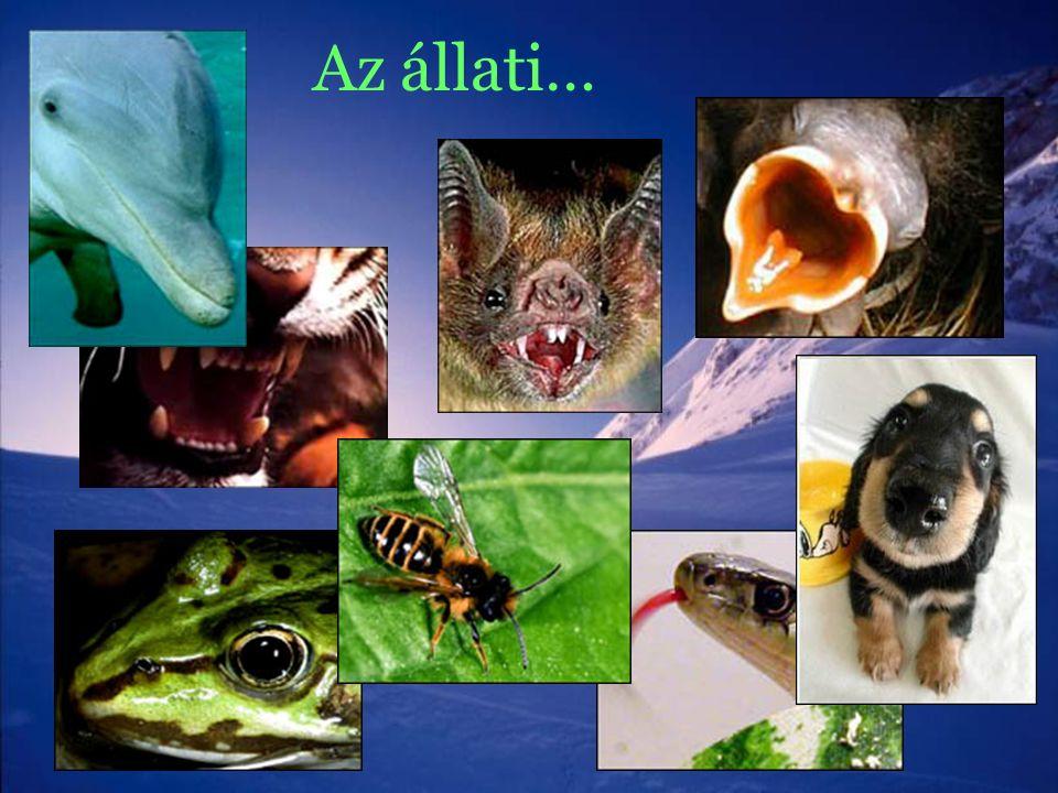 Az állati…