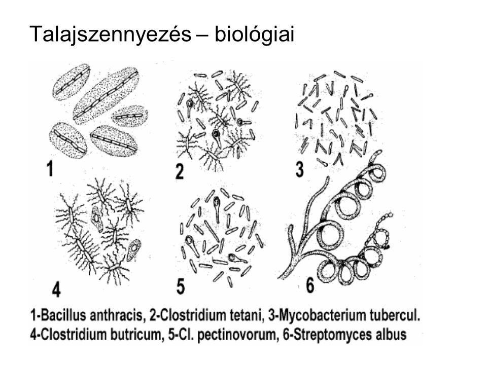 Talajszennyezés – biológiai