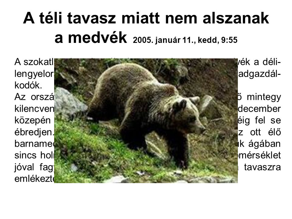 A téli tavasz miatt nem alszanak a medvék 2005. január 11., kedd, 9:55