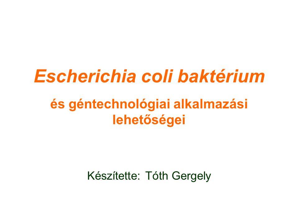 Escherichia coli baktérium