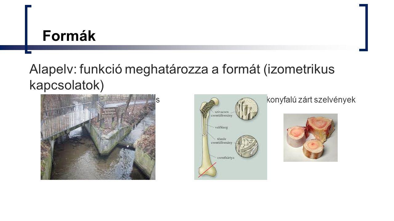 Formák Alapelv: funkció meghatározza a formát (izometrikus kapcsolatok) keresztmetszeti terület növelés csavarás-vékonyfalú zárt szelvények.