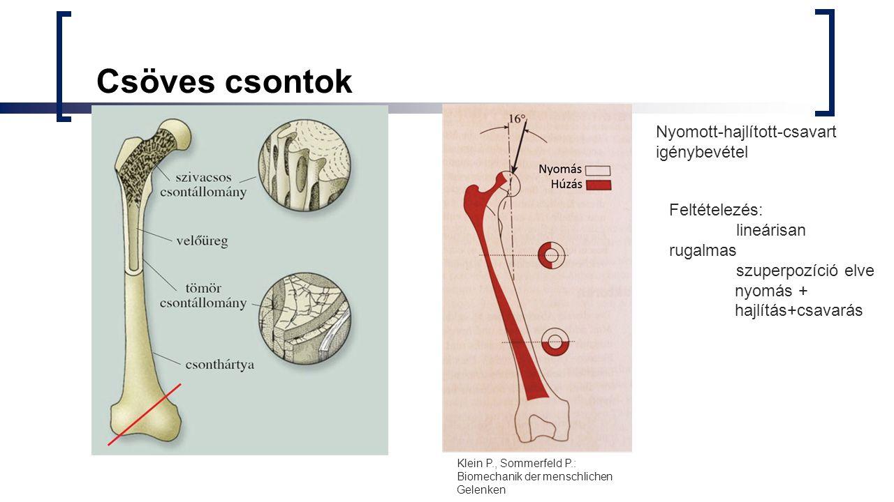 Csöves csontok Nyomott-hajlított-csavart igénybevétel Feltételezés: