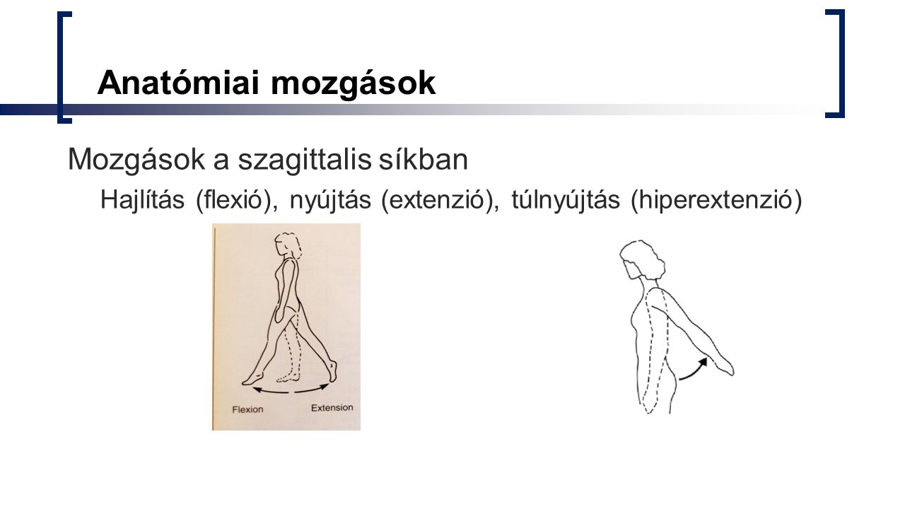 Anatómiai mozgások Mozgások a szagittalis síkban