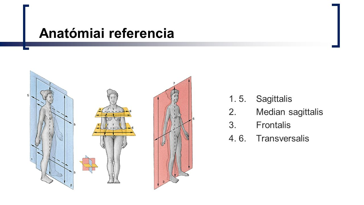 Anatómiai referencia 1. 5. Sagittalis 2. Median sagittalis