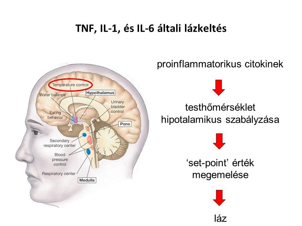 TNF, IL-1, és IL-6 általi lázkeltés