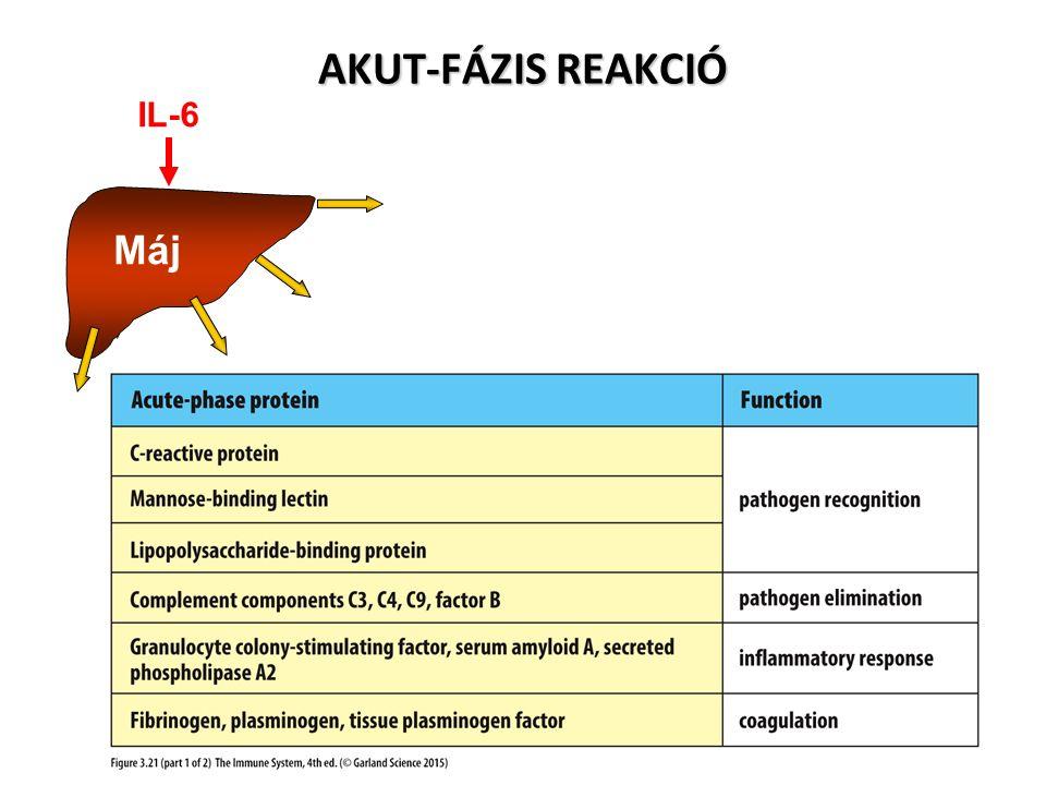 AKUT-FÁZIS REAKCIÓ Máj IL-6