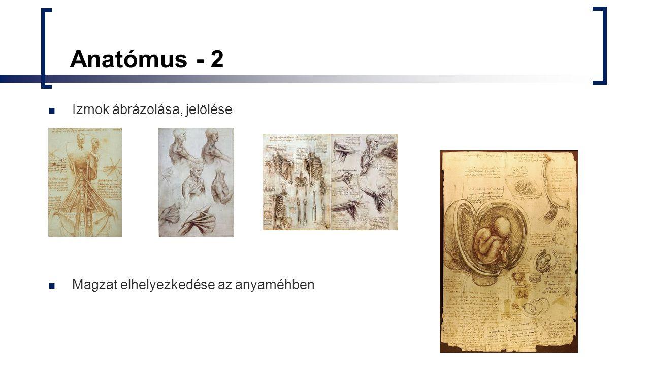 Anatómus - 2 Izmok ábrázolása, jelölése