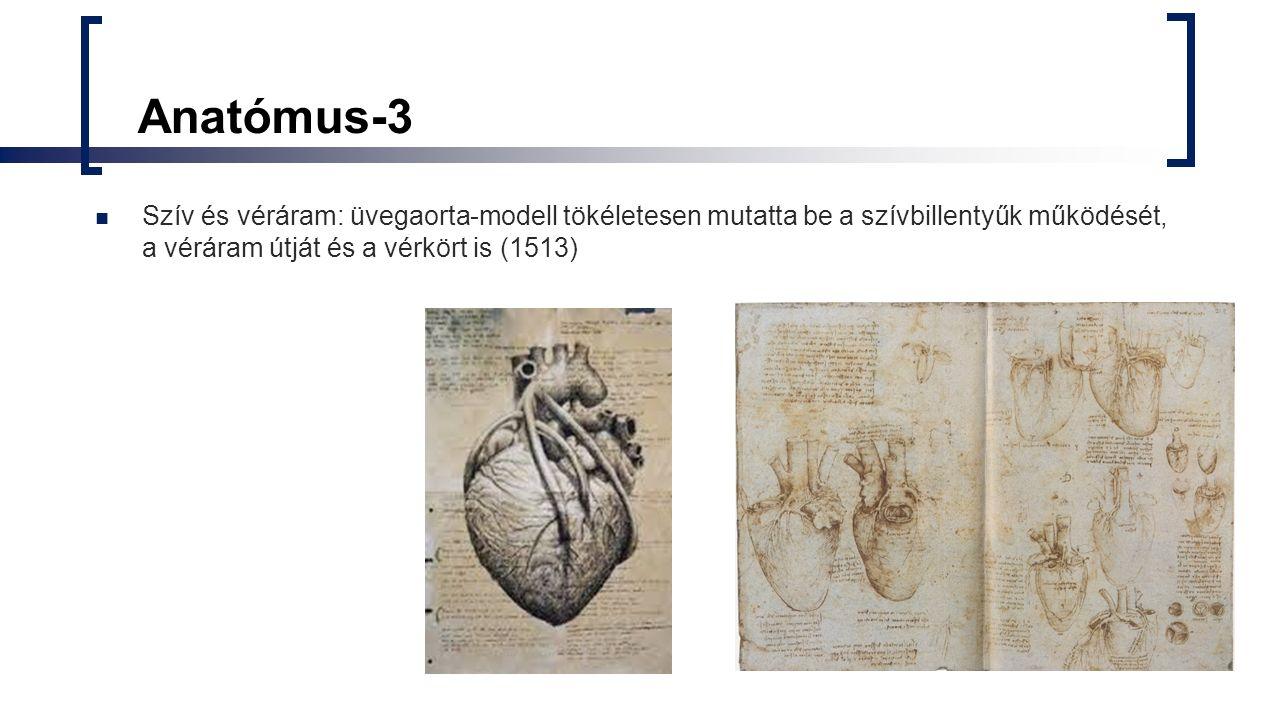 Anatómus-3 Szív és véráram: üvegaorta-modell tökéletesen mutatta be a szívbillentyűk működését, a véráram útját és a vérkört is (1513)