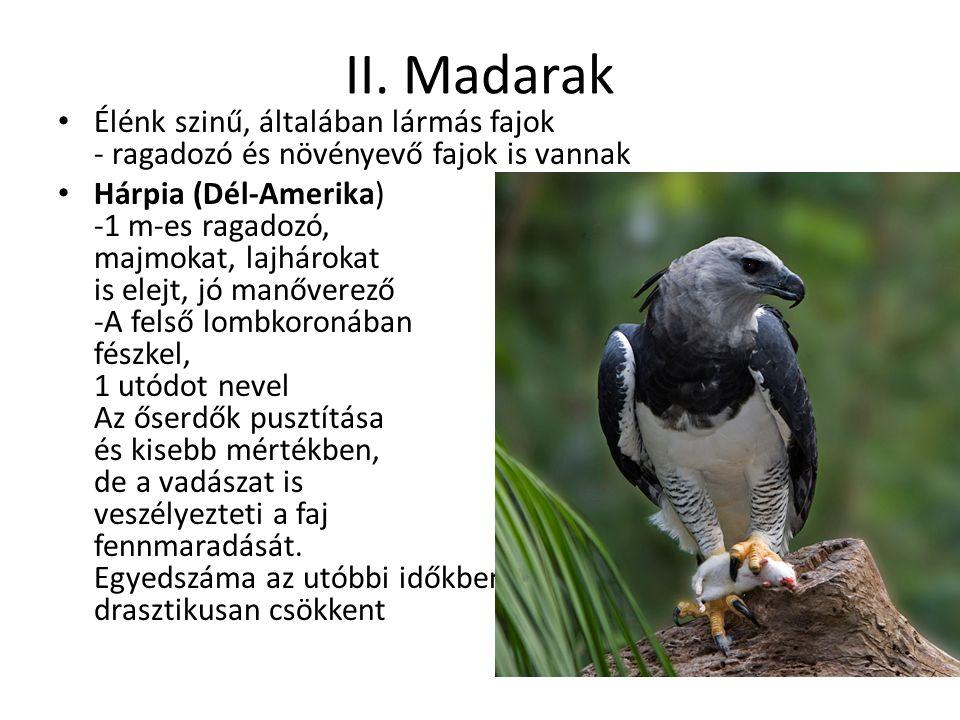 II. Madarak Élénk szinű, általában lármás fajok - ragadozó és növényevő fajok is vannak.