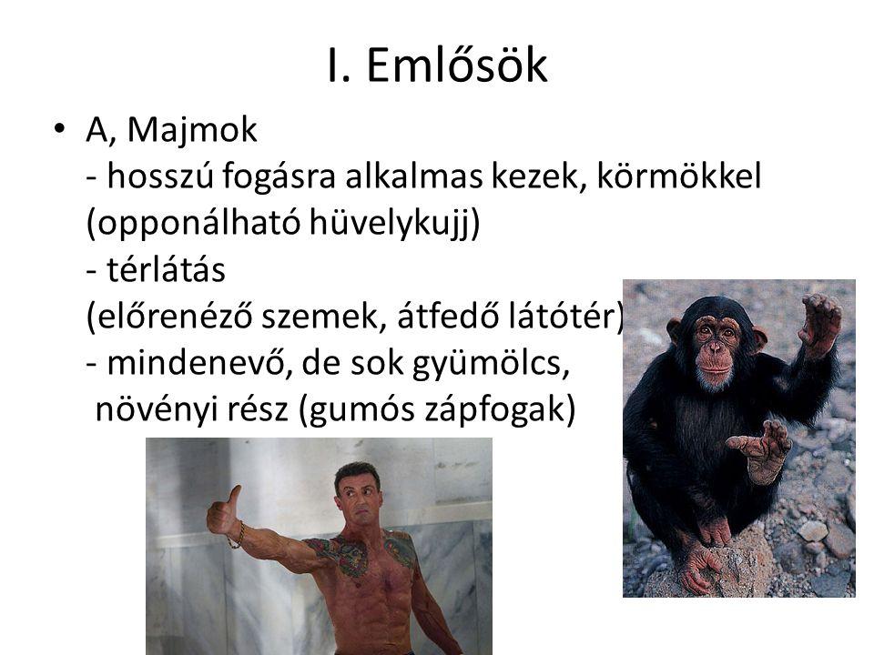 I. Emlősök