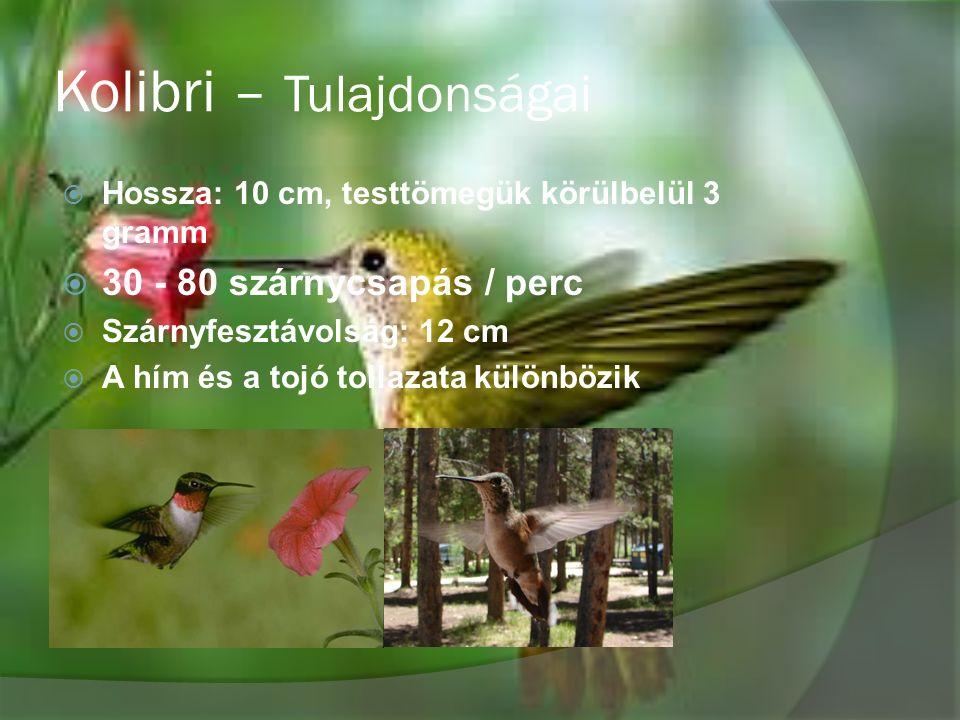 Kolibri – Tulajdonságai