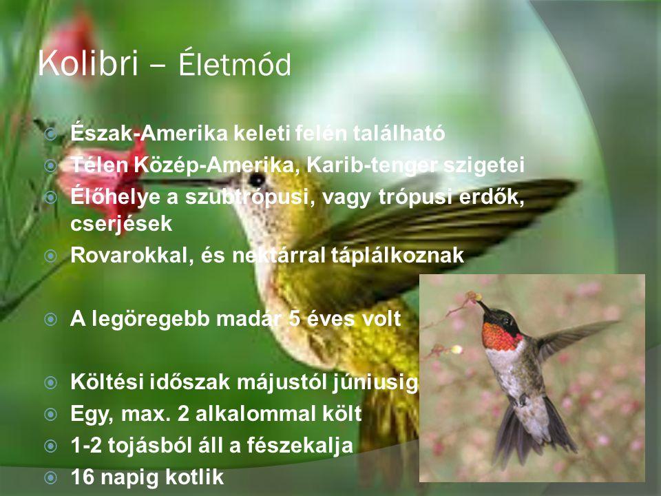 Kolibri – Életmód Észak-Amerika keleti felén található