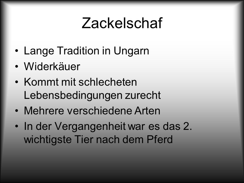 Zackelschaf Lange Tradition in Ungarn Widerkäuer