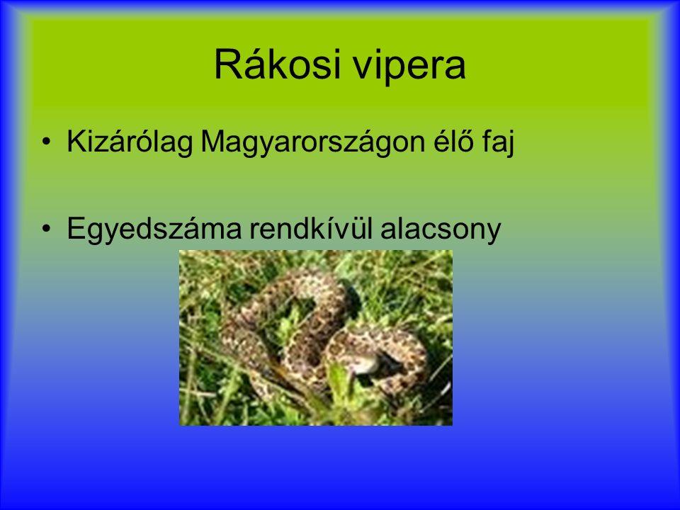 Rákosi vipera Kizárólag Magyarországon élő faj