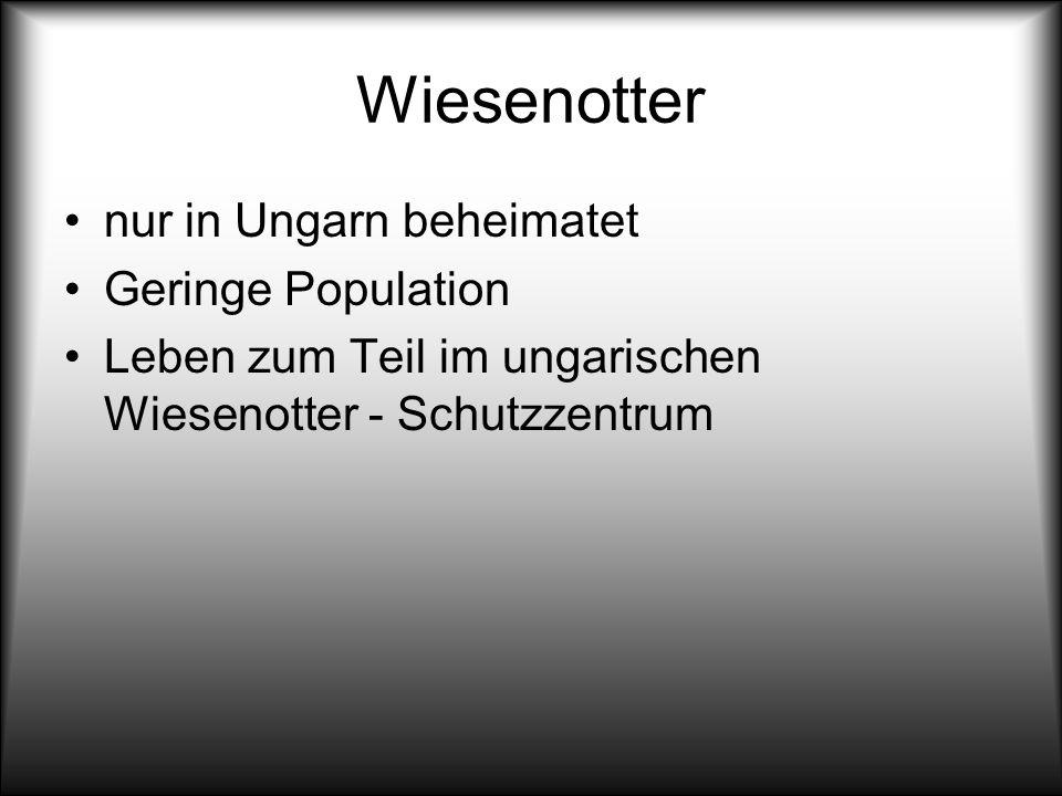 Wiesenotter nur in Ungarn beheimatet Geringe Population