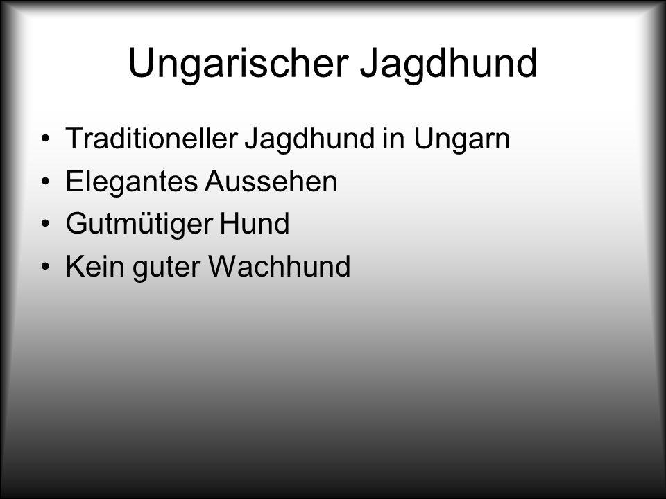 Ungarischer Jagdhund Traditioneller Jagdhund in Ungarn