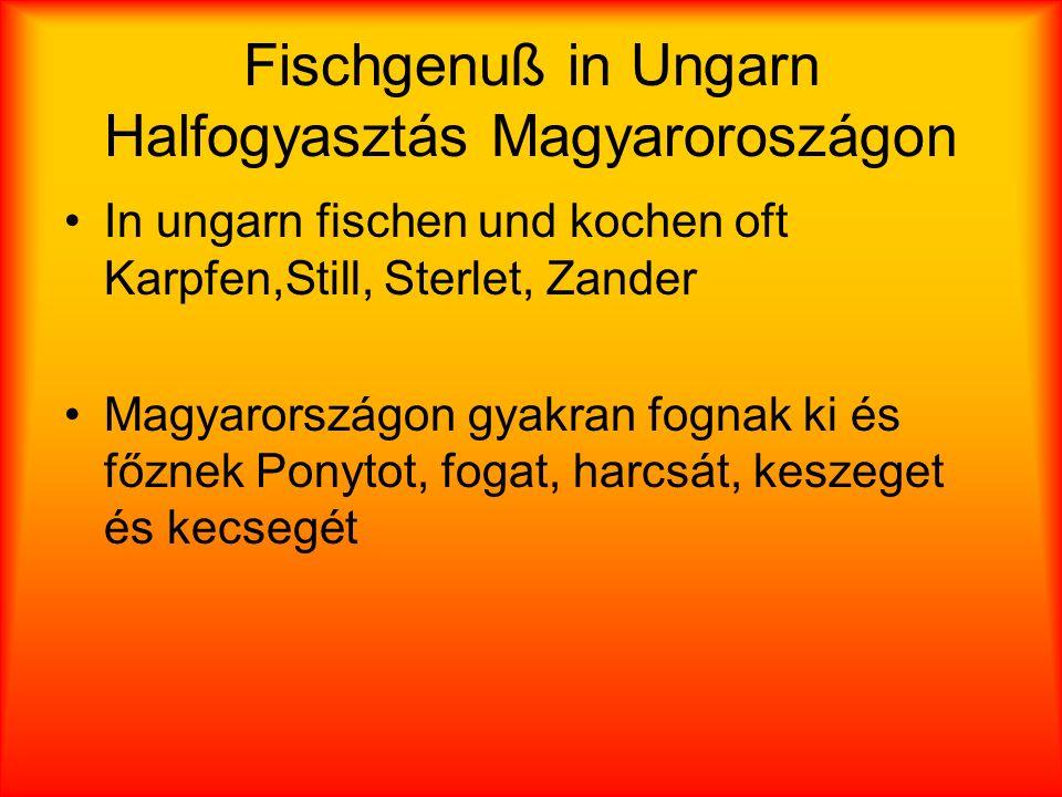 Fischgenuß in Ungarn Halfogyasztás Magyaroroszágon