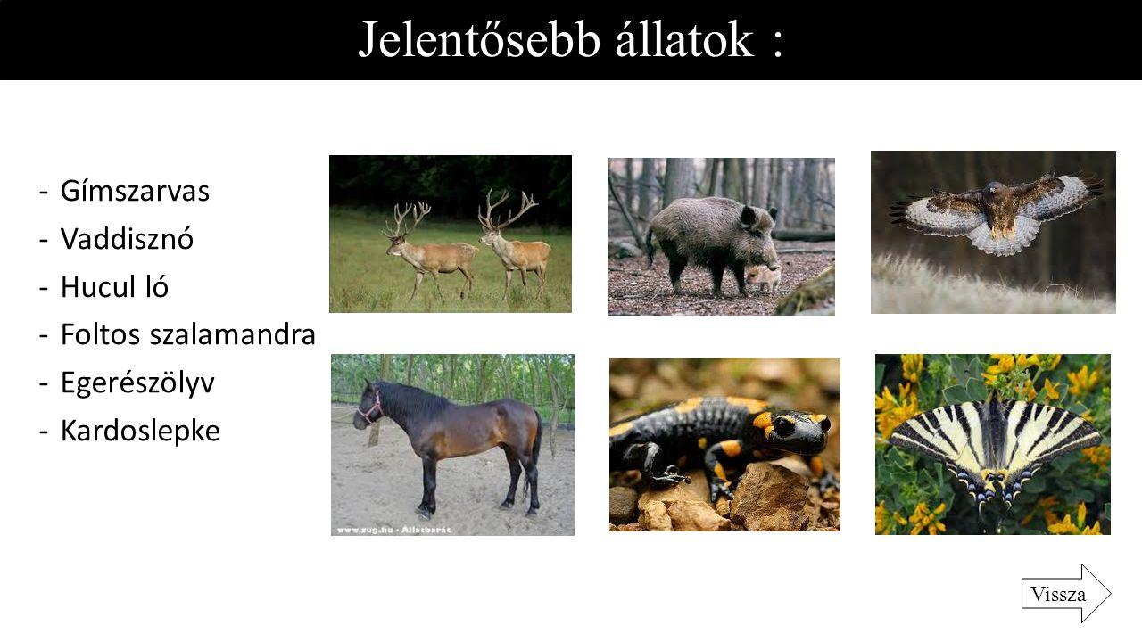Jelentősebb állatok : Gímszarvas Vaddisznó Hucul ló Foltos szalamandra