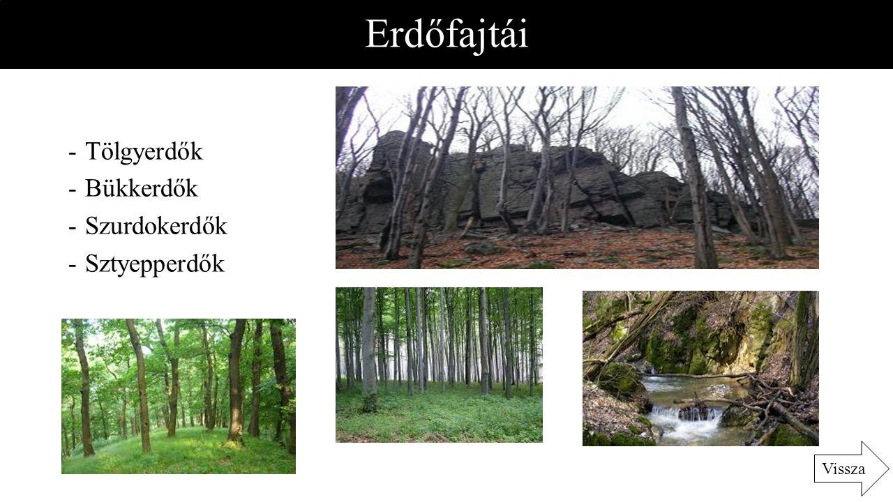 Erdőfajtái Tölgyerdők Bükkerdők Szurdokerdők Sztyepperdők Vissza