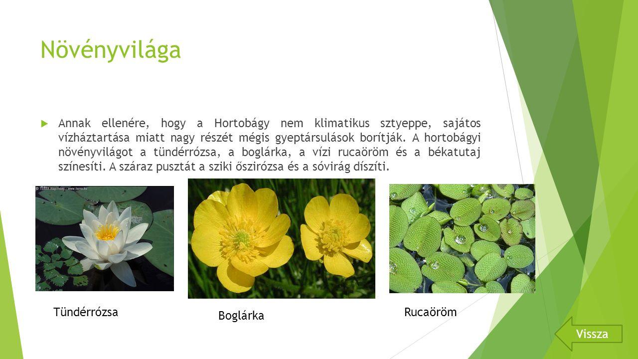 Növényvilága