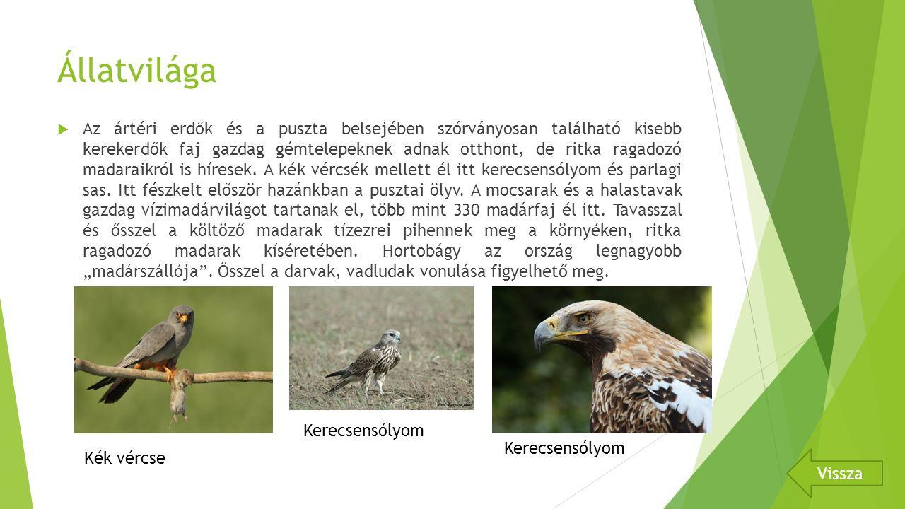 Állatvilága