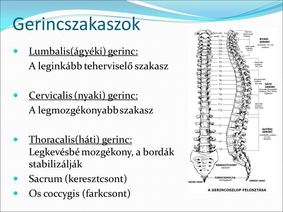 vállfájdalom és kezelése kiütések és ízületi fájdalmak
