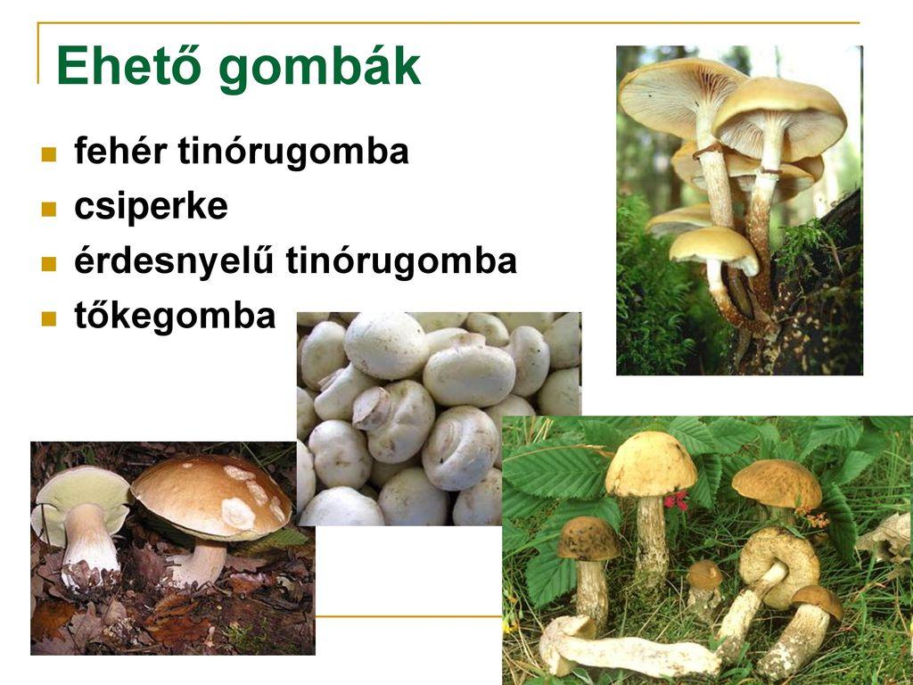 Baktériumvírusok gombák és paraziták ppt - Giardia cane e bambini