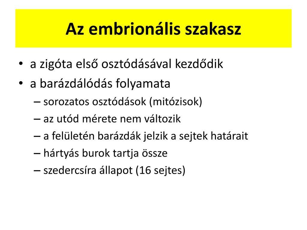 Embrionális szakasz