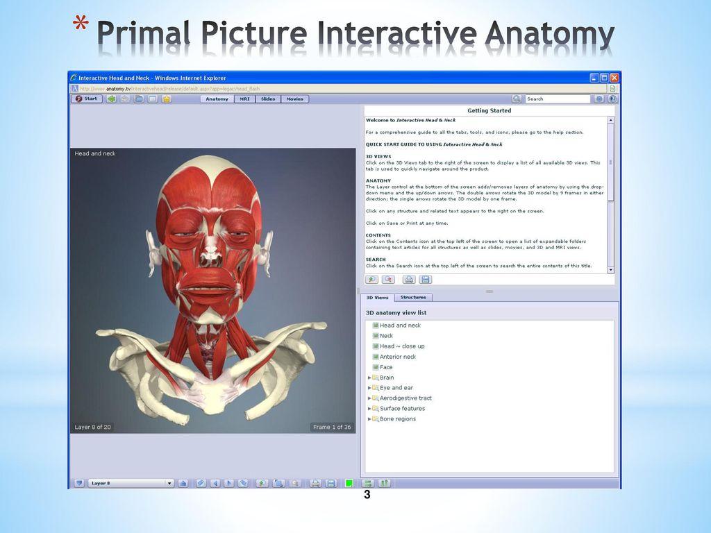 Primal 3d Anatomy Gallery - human anatomy diagram organs