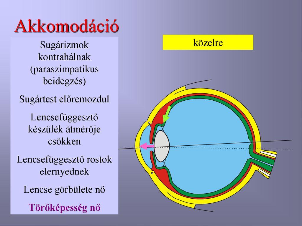 paraszimpatikus látás