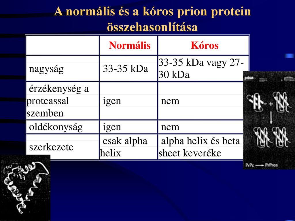 Spongiform jelentése