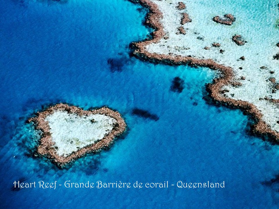 Heart Reef - Grande Barrière de corail - Queensland