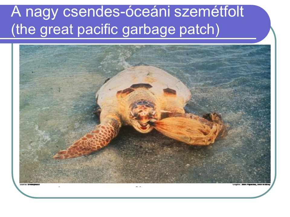 A nagy csendes-óceáni szemétfolt (the great pacific garbage patch)