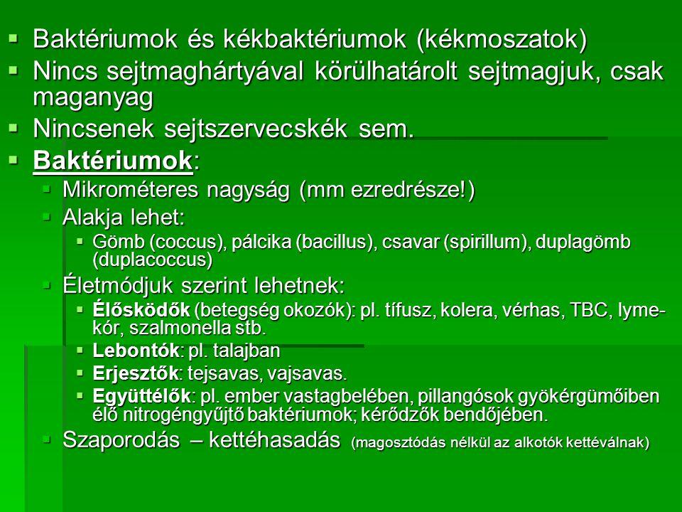emésztő baktériumok)