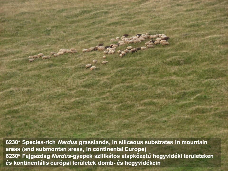 6230* Species-rich Nardus grasslands, in siliceous substrates in mountain areas (and submontan areas, in continental Europe)
