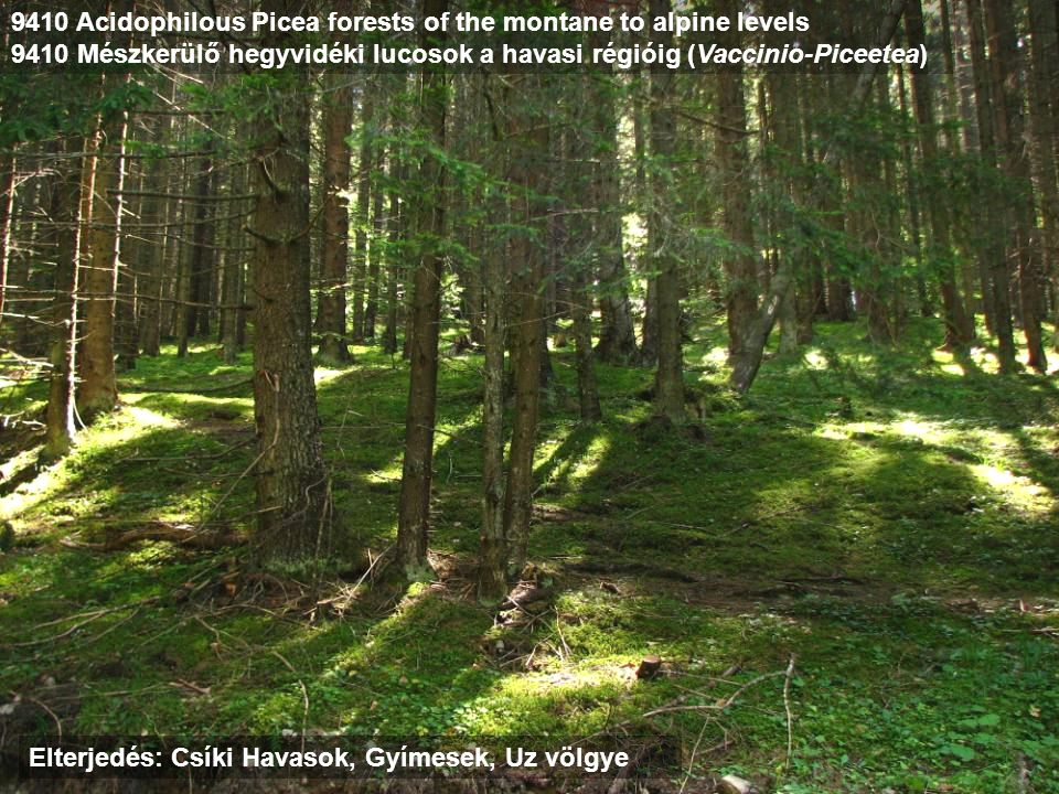 9410 Acidophilous Picea forests of the montane to alpine levels