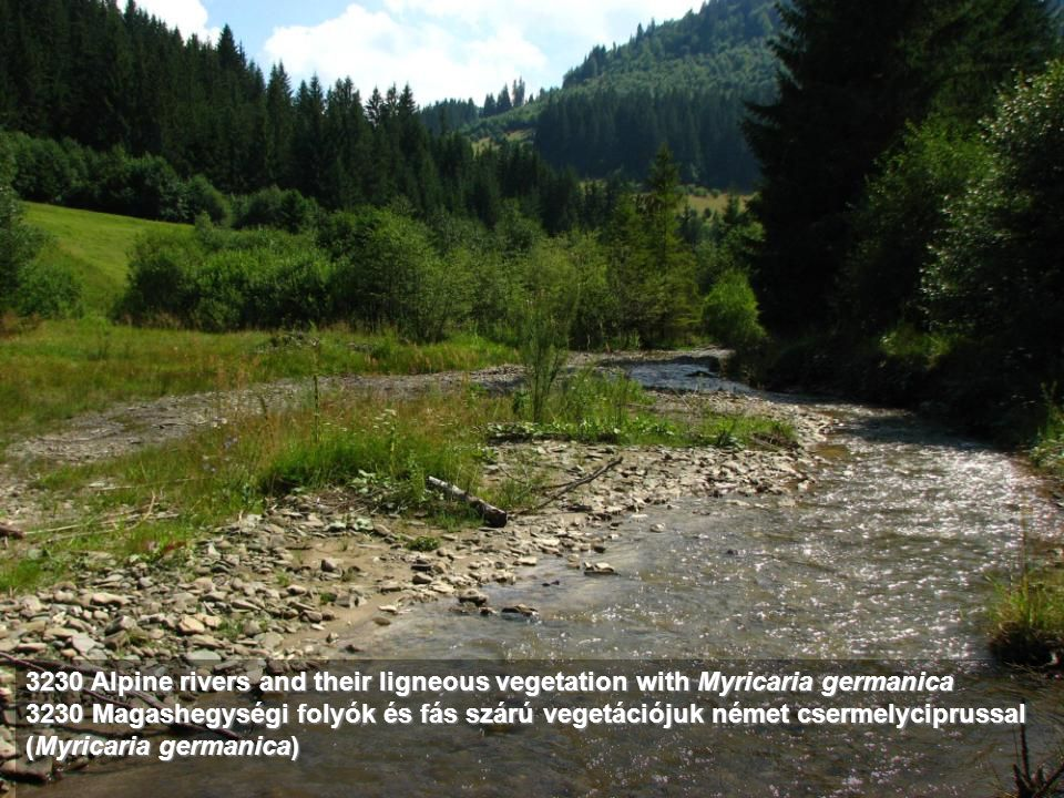 3230 Alpine rivers and their ligneous vegetation with Myricaria germanica