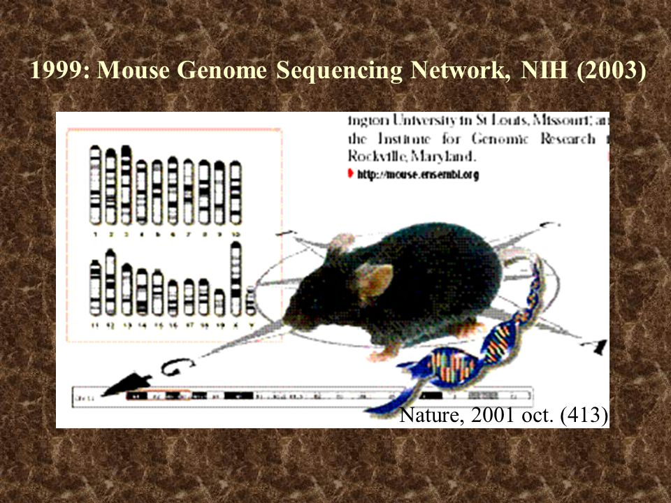 1999: Mouse Genome Sequencing Network, NIH (2003)