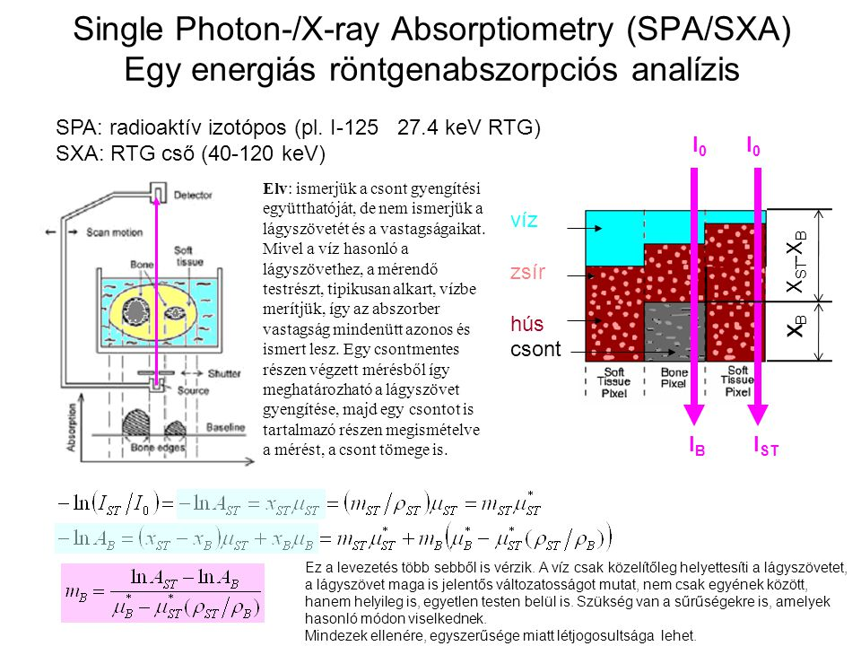 Single Photon-/X-ray Absorptiometry (SPA/SXA) Egy energiás röntgenabszorpciós analízis