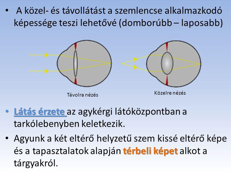 A szem és a látás. - ppt letölteni 28725f48b7