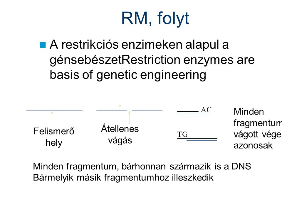 RM, folyt A restrikciós enzimeken alapul a génsebészetRestriction enzymes are basis of genetic engineering.