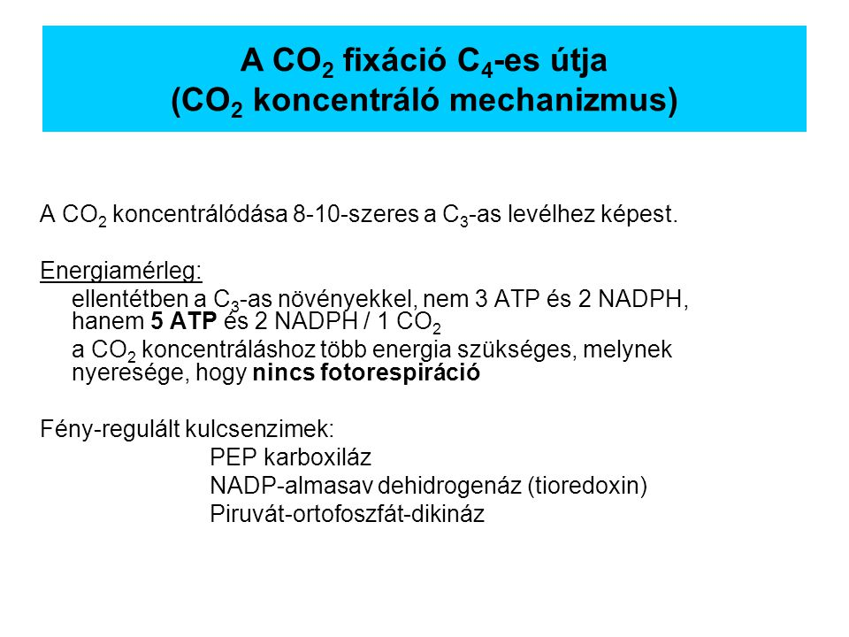 A CO2 fixáció C4-es útja (CO2 koncentráló mechanizmus)