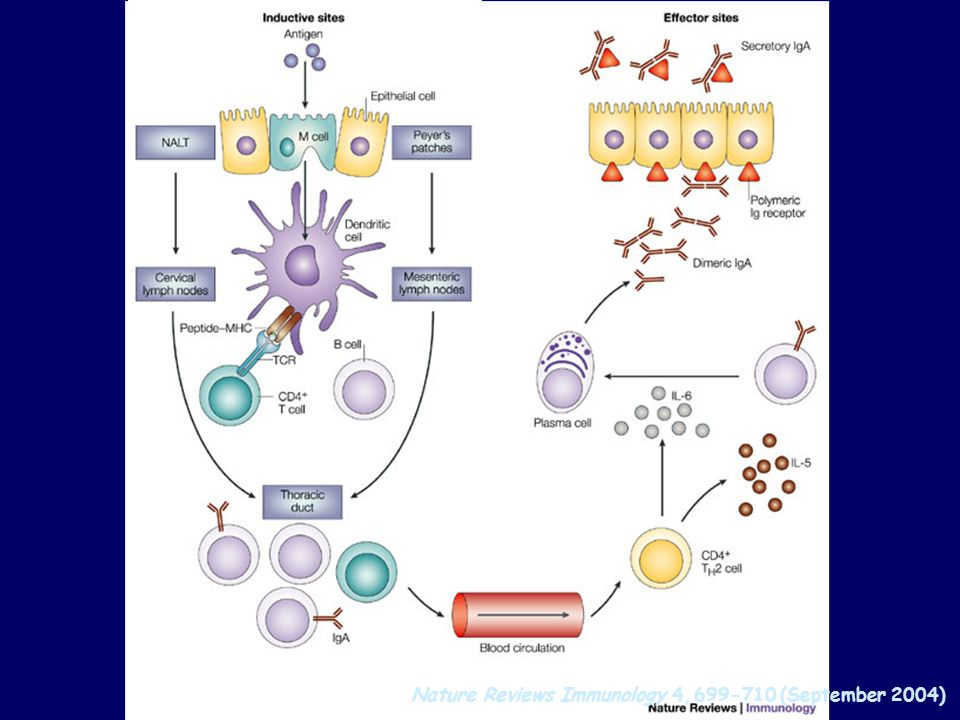 Nature Reviews Immunology 4, (September 2004)