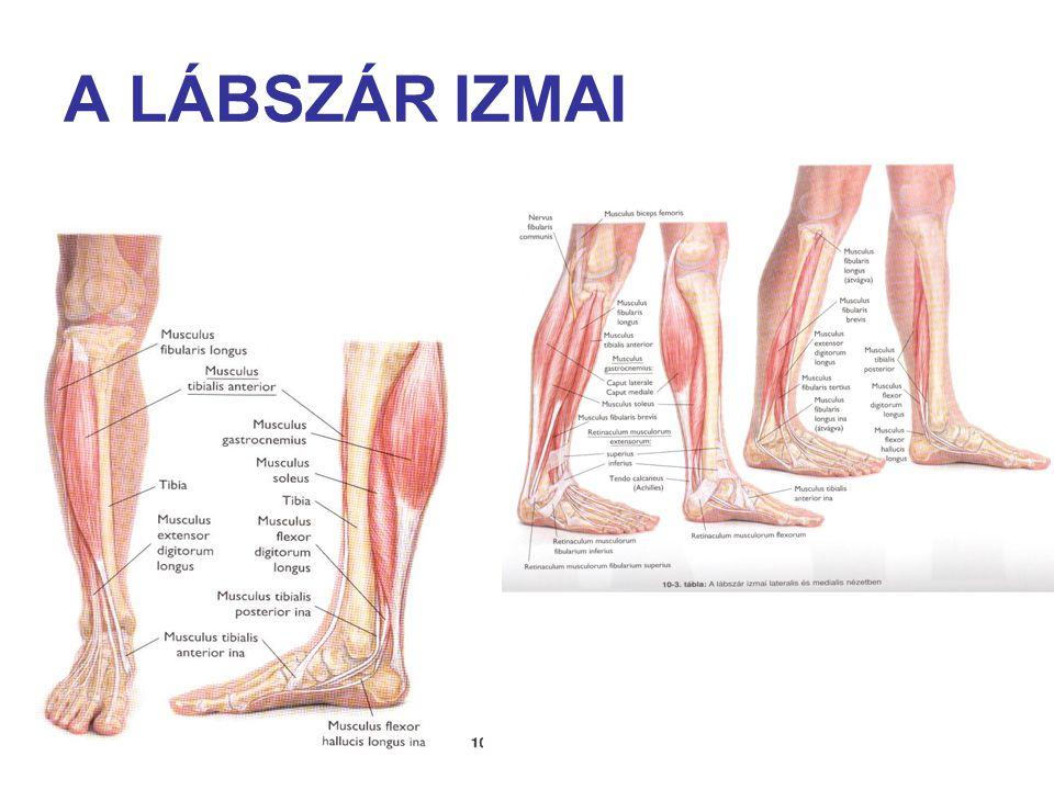 alsó lábszár ízület kezelés