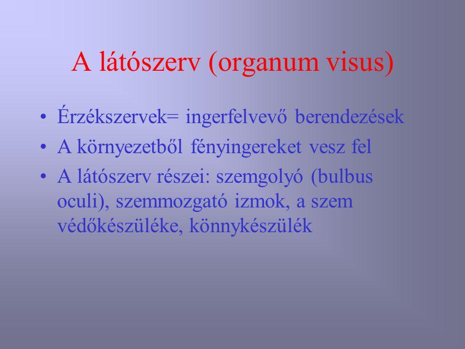 atlasz látószerv normál anatómiája)