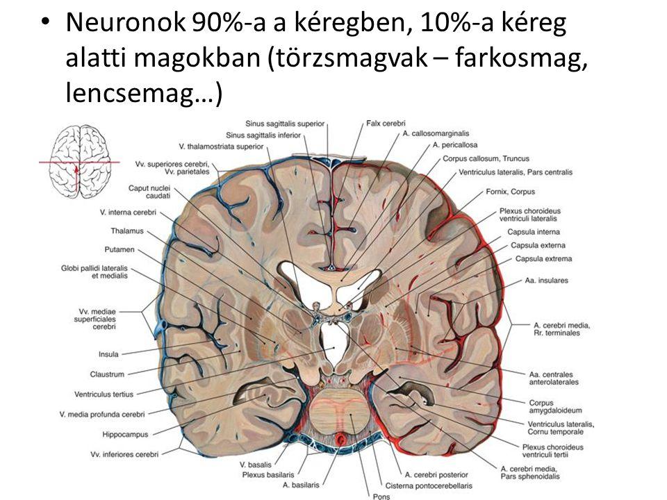 posztmenopauzális hipertónia