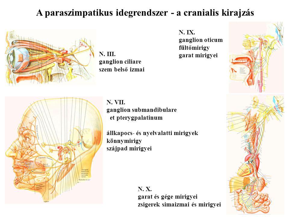 Perifériás idegrendszer, vegetatív idegrendszer - ppt letölteni