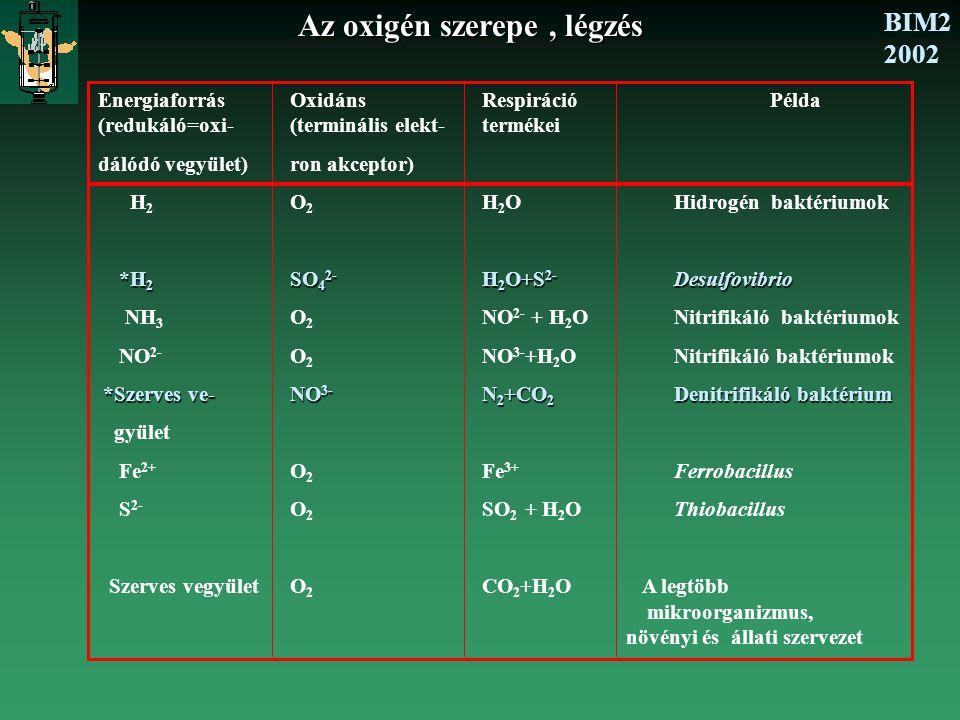 fermentációs baktériumok)