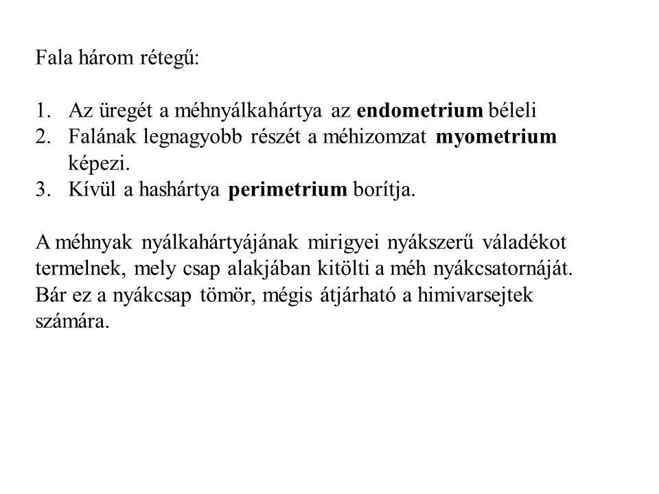 Bartholin mirigyei szemölcsök)
